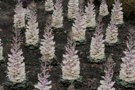 jardin_botanico